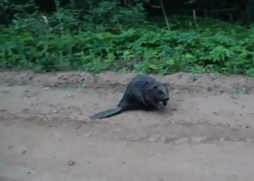 Kadr z filmu /YouTube