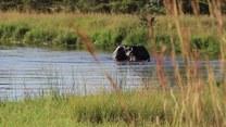 Kąpiel słonia! Niesamowite nagranie