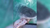 Karmienie rekina z ręki. Odważylibyście się?