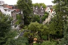 Kasztanowiec Anne Frank złamany