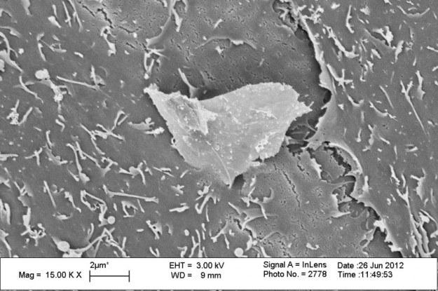 Kawałek grafenu penetruje błonę komórkową keratynocytu /materiały prasowe