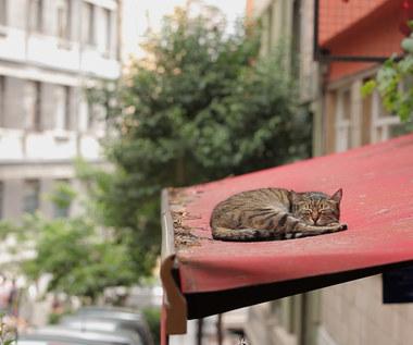 """""""Kedi - Sekretne życie kotów"""" [recenzja]: Wolność kocham i rozumiem"""