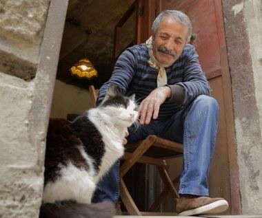 """""""Kedi - sekretne życie kotów"""""""
