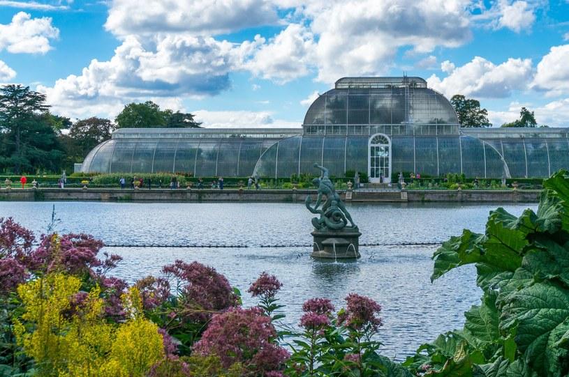 Kew Garden w Londynie /123RF/PICSEL