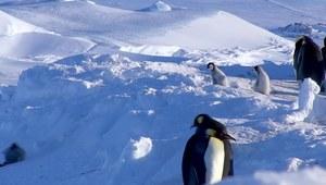 Kiedy masz ciężki dzień, te pingwiny cie pocieszą