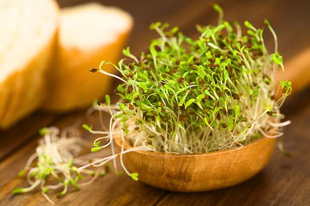 avantages des graines germées