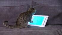 Kłębki i myszy poszły w odstawkę. Współczesne koty wolą tablety!