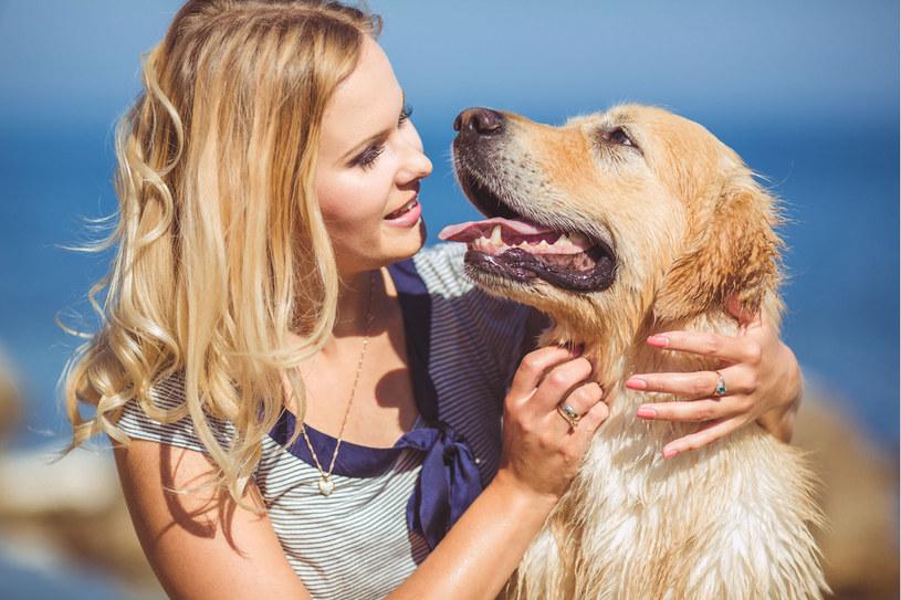 Kluczowe są pierwsze 24 godziny. Dlatego po każdym spacerze należy zrobić przegląd sierści, ze szczególnym uwzględnieniem okolic brzucha, uszu, ogona i pachwin psa /123RF/PICSEL