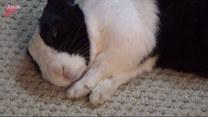 Kobieta obudziła śpiącego królika przy pomocy syreny