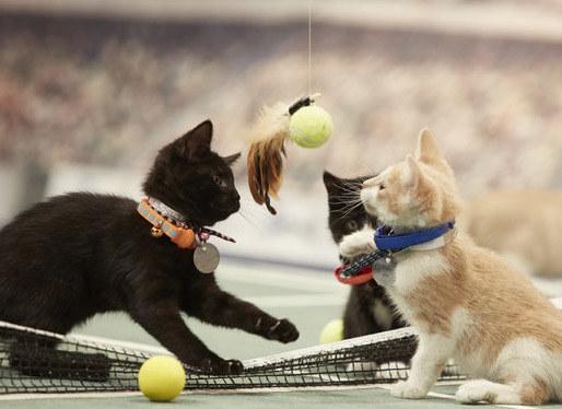 Koci tenisiści /Challmark Chanell/ Printscreen /INTERIA.PL