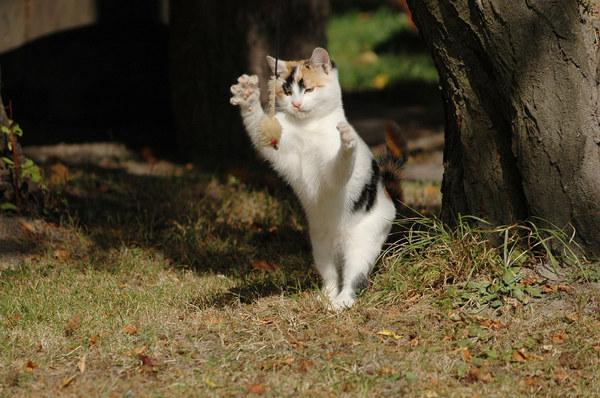 """Ludzie mają swoje rozrywki, a koty swoje. Nasza mała, na co dzień kanapowy leniuszek, przy okazji wizyty na wsi mogła się wyszaleć i poganiać za """"myszką""""."""