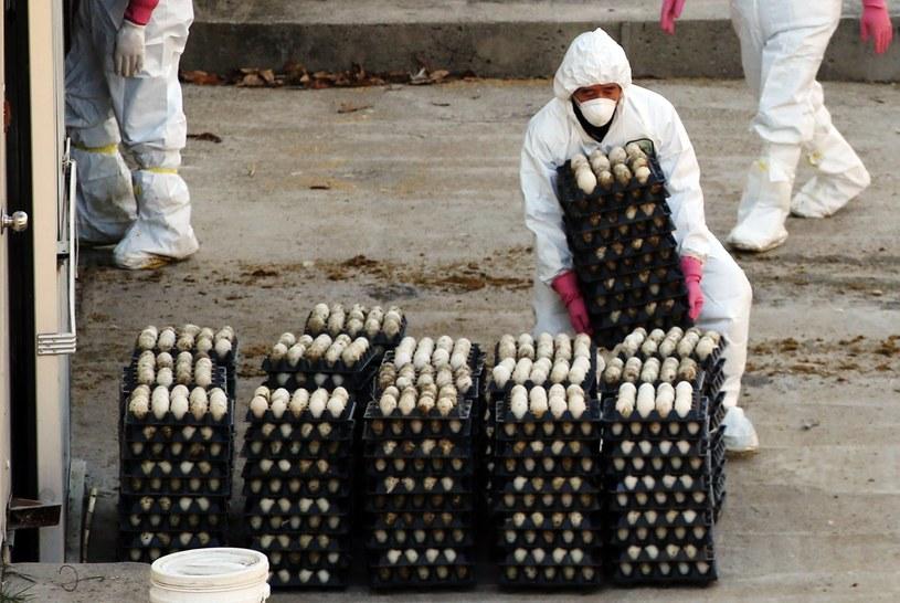 Kolejna mutacja wirusa grypy /AFP