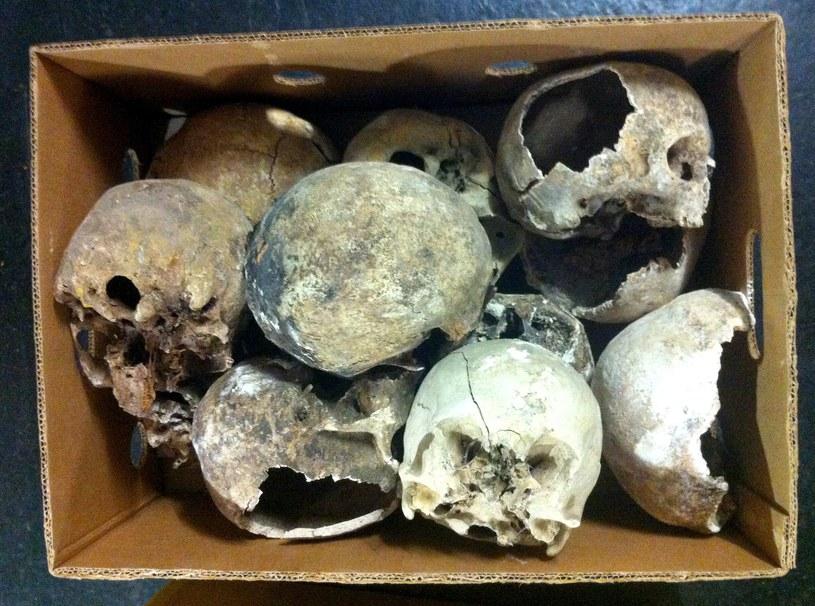 Kolekcjoner kości wszedł w posiadanie szczątków bezprawnie /KATHRIN SPALTL /PAP/EPA