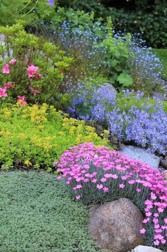 Kolorowe rośliny na skalniaku /©123RF/PICSEL
