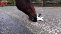 Koń zachęca kota do zabawy
