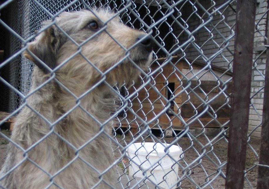 Koncert charytatywny dla zwierzaków odbędzie się już 27 listopada /Archiwum RMF FM