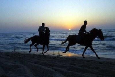 Konie, plaża, zachód słońca. Trudno wyobrazić sobie piękniejszą scenerię dla wakacyjnego romansu /AFP