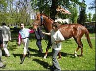 Konie znów ze sobą rywalizują /RMF