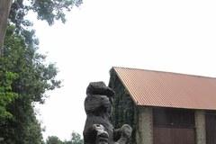 Koniki polskie na Roztoczu