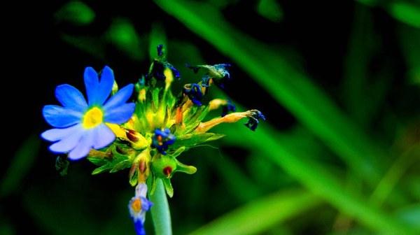 Maj to najpiękniejszy miesiąc w roku. Eskalacja barw w moim ogrodzie to prawdziwe szczęście dla mojego oka i  oczu moich przyjaciół. Moja majówka to spędzanie czasu właśnie w moim ogrodzie, zdjęcia, które dodałam do galerii to tylko część piękna, które uchwyciłam moim aparatem.