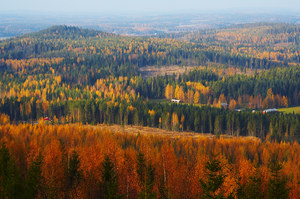Konkurs na zarządzanie lasami