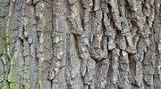 Kora drzew skutecznie leczy zmiany na skórze