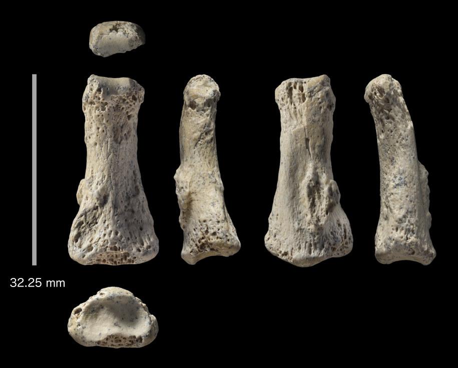 Kość palca stopy z Al Wusta w Arabii Saudyjskiej, sfotografowany z sześciu kierunków. /Ian Cartwright /Materiały prasowe