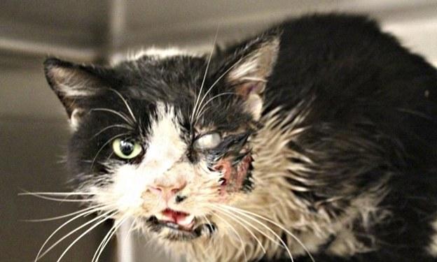 Kot Bart, który wstał z grobu /Humane Society of Tampa Bay /