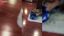 Kot dorwał się do miski psa