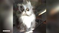 Kot dotknięty syndromem wilkołaka to ulubieniec internautów