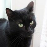 """Kot Felek """"biegał luzem"""" po wiejskiej drodze. Sąd uniewinnił sołtysa"""