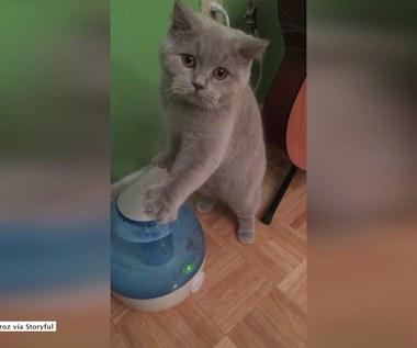 Kot kontra odświeżacz powietrza. Kto wygra tą walkę?