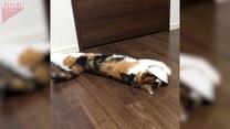Kot, który bardzo kocha swoją miskę