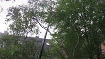 Kot na drzewie. Akcja ratunkowa