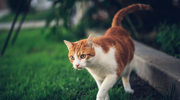 Kot na dworze – jak zapewnić mu bezpieczeństwo?