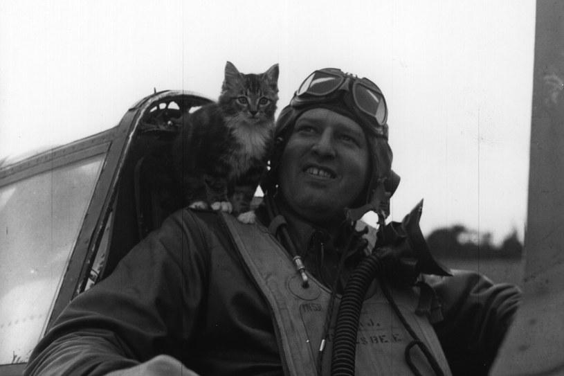 Kot na ramieniu pilota RAFu, 1944 rok /Getty Images/Flash Press Media