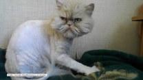 Kot o mrożącym krew w żyłach spojrzeniu