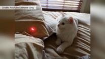 Kot oszalał na widok lasera