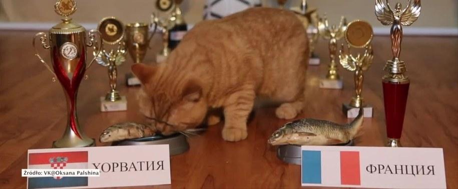 Kot podczas typowania /RUPTLY/x-news