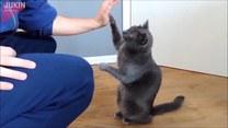 Kot reagował na każde jego polecenie