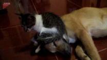 Kot siadł na łbie psa. A potem?