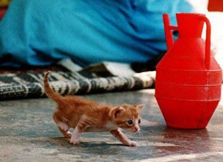 Kot skrada się - prawdopodobnie chce ukraść majtki /AFP