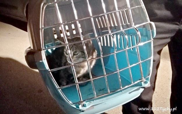 Kot trafił do weterynarza /