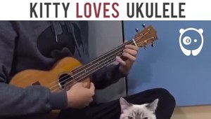 Kot uwielbiający ukulele