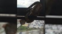 Kot w oknie wieżowca! Jego mina bezcenna