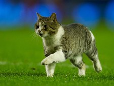Kot wtargnął na boisko i został bohaterem kolejki Premier League