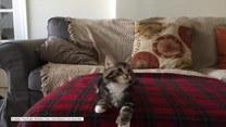 Kot z prawdziwym talentem tanecznym