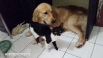 Kot zaczepia swojego psiego kolegę. Czy uda mu się zwrócić na siebie uwagę?