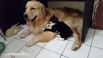 Kot zaczepia swojego psiego kolegę