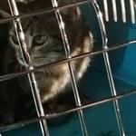 Kotek utknął pod maską auta. Uratowali go strażacy